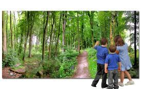 A Path through the forest backdrop - Outdoor Education - Tiger Moon