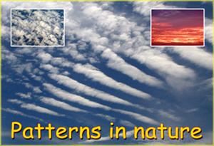 Patterns in Nature (Display Pack) - Tiger Moon